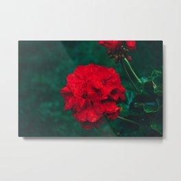 Red flower of love Metal Print