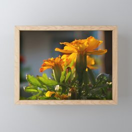Fireburst Flower Framed Mini Art Print