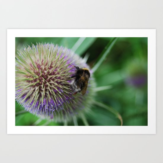 Bee in the summer Art Print