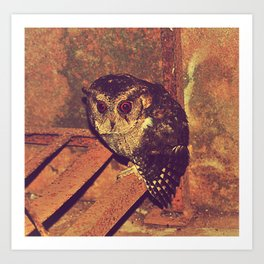 Owl / Photography / Bird Photography / Sexycuteamiee / AmyTmy Prints Art Print