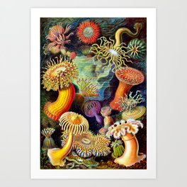 Under the Sea : Sea Anemones (Actiniae) by Ernst Haeckel Art Print