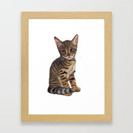 Bengal Kitten, Blue-eyed Kitten, Cute Cat Framed Art Print