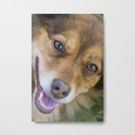 Portrait of a cute dog laughing Metal Print