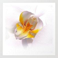 orchid macro IV Art Print