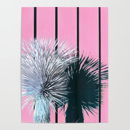 Yucca Plant in Front of Striped Pink Wall Poster