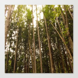 The Tall Trees Canvas Print