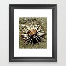 Sea Urchin Framed Art Print