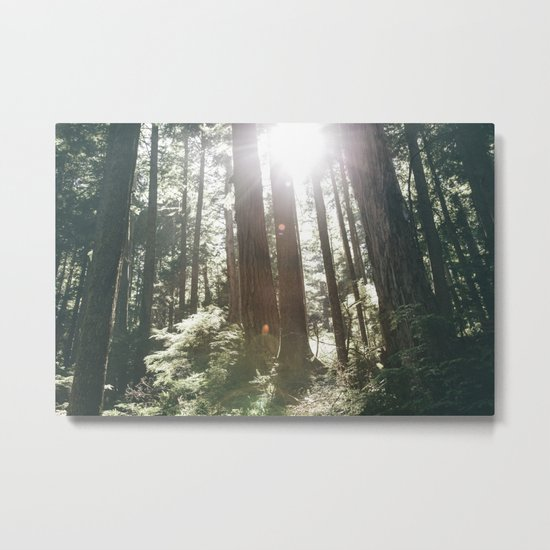 Sunny Forest Metal Print
