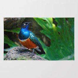 A Stunning African Superb Starling Rug