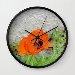 Poppy in the garden Wall Clock