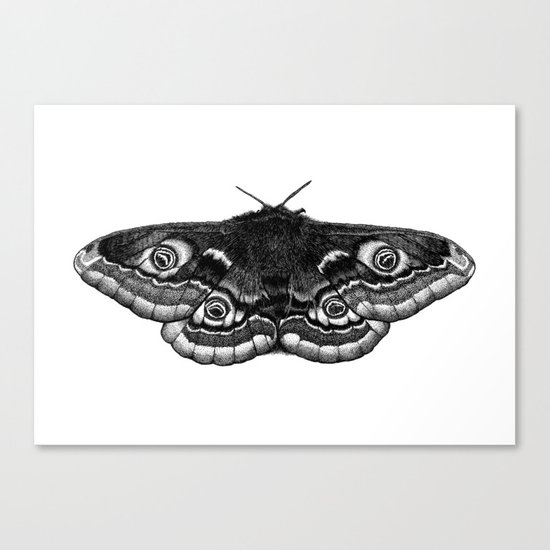 Moth Dotwork Drawing Canvas Print