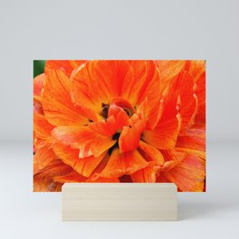 Peony Tulip Closeup Mini Art Print