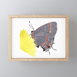 Red Hairstreak Butterfly Framed Mini Art Print