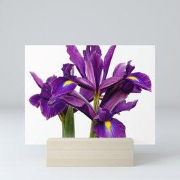 Elegant Dutch Iris Purple Sensation Mini Art Print