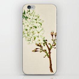 Gyoi-ko or Robe Yellow Cherry Blossoms iPhone Skin