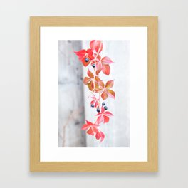 Rustic Berry Vine in the Fall Framed Art Print