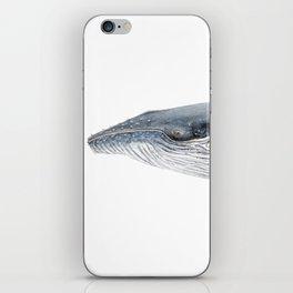 Humpback whale portrait iPhone Skin