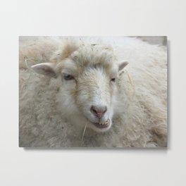 Cool sheep Metal Print
