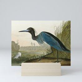 Little Blue Heron - John James Audubon's Birds of America Print Mini Art Print