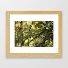 The Ant Framed Art Print
