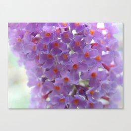 Purple Cluster Canvas Print