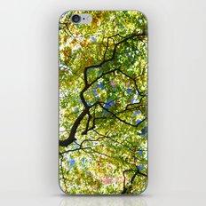 Arboretum Tree iPhone & iPod Skin
