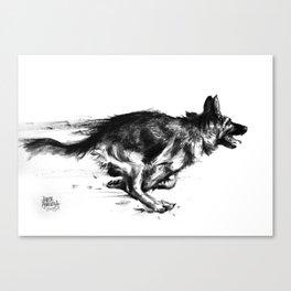 Running shepherd Canvas Print