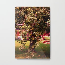 Johnny Appleseed Tree In Fall Metal Print