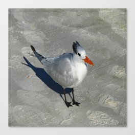 Siesta Key Tern Canvas Print