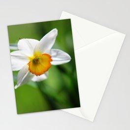 Beautiful Daffodil Stationery Cards