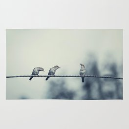Three birds on wire, one of the bird has a food Rug