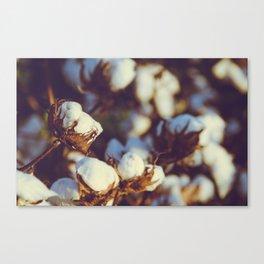 Cotton Field 18 Canvas Print