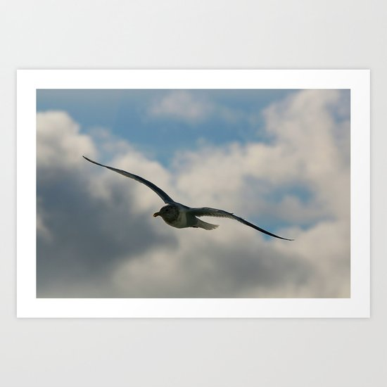 Graceful Wings Art Print