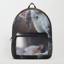 Sheep Looking at Camera Backpack