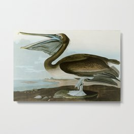 Brown Pelican - John James Audubon's Birds of America Print Metal Print