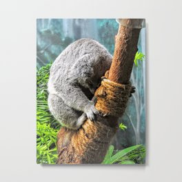Koala Nap Time Metal Print