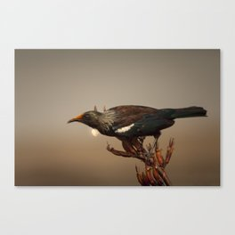 Tui on Flax Canvas Print
