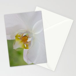 White Orchid up Close Stationery Cards