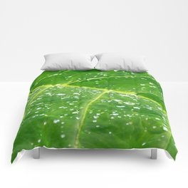 Morning Dew Comforters