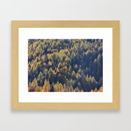 Beautiful autumn forest in mountain Framed Art Print