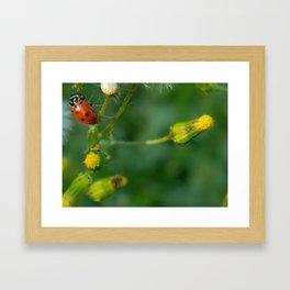 Lady Bug Dandelion Framed Art Print