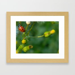 Lady Bug Dandelion Framed Art Print