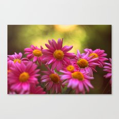 Anthemis 2632 Canvas Print