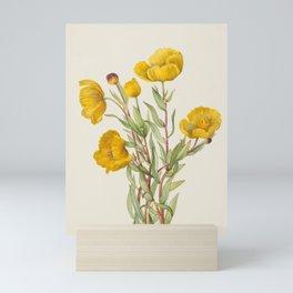 Bush Poppy Vintage Botanical Print, Mary Vaux Walcott Mini Art Print