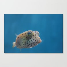 Yellow Boxfish Canvas Print