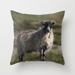 Scottish Blackface Throw Pillow