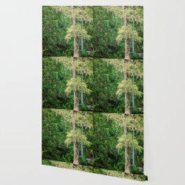 Florida Cypress Tree and Spring Wallpaper