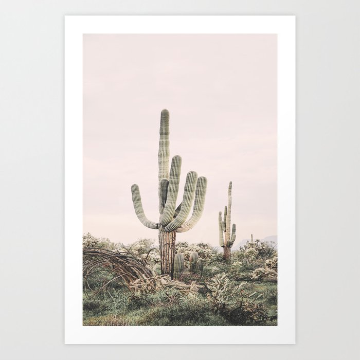 Pastel Pink Cactus Kunstdrucke