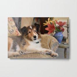 Sheltland Sheepdog and Flowers Metal Print