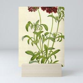 Flower scabiosa atropurpurea18 Mini Art Print